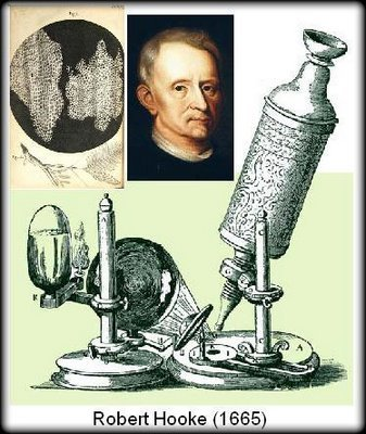 robert hookes contribution in the field of science Start studying robert hooke learn vocabulary, terms, and more with flashcards robert hooke made contributions in architecture robert hooke made contributions in revolutionized science, physics, and the world history gave who the credit.